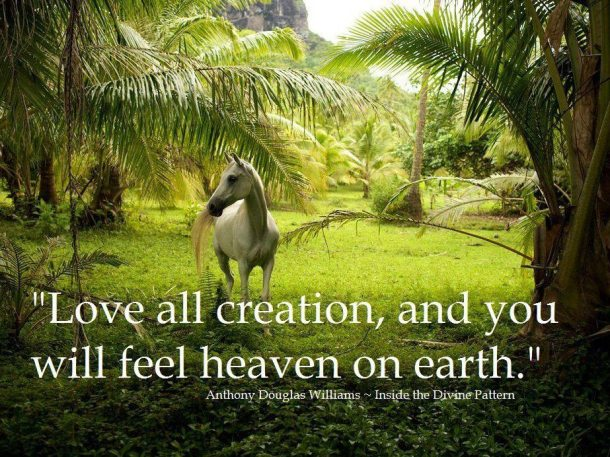 Love all creation and you will feel heaven on earth